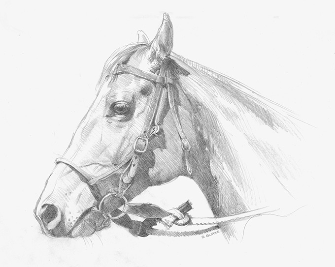 Waiting turn... a participant in the Gladstone Campdraft NSW. Pencil on paper.