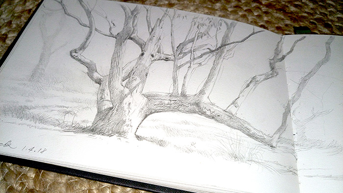 From the sketchbook, The Red Point Tree.