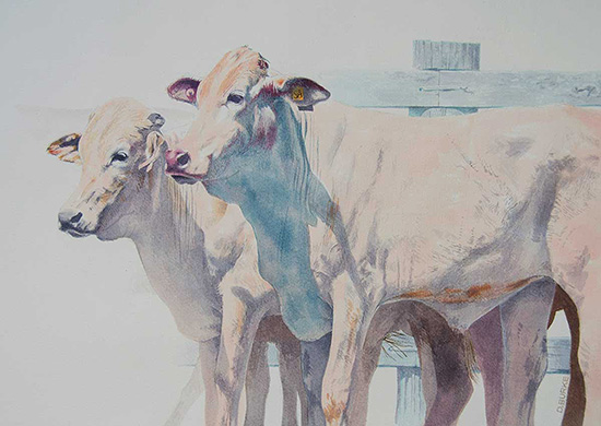 Cattle at the Gladstone Camp Draft. Watercolour.